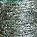 hot dipped galvanized barbed wire-BT