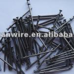 iron nails for exporting-HZ-CY446